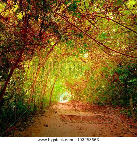 Fantasy Forest In Autumn Colors With Tunnel And Path Way