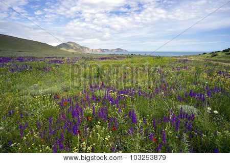 Wildflowers On A Background Of Mountains And Sea.