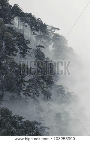 Amazing misty landscape
