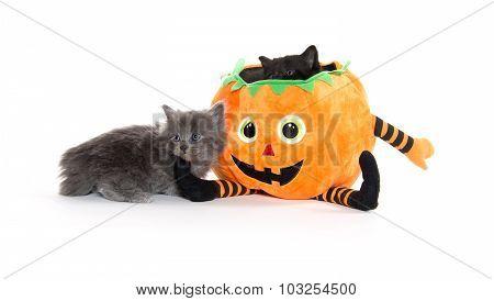 Cute Black Kitten In Pumpkin