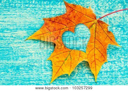 An Autumn Leaf With Heart Shaped Cutout