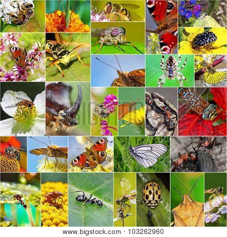 Insects Of Siberia. A collage of photos