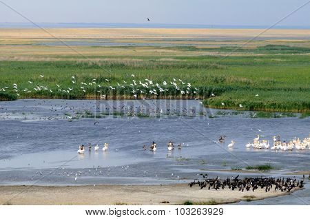 General Aerial View Of Manych Lake With Lots Of Birds