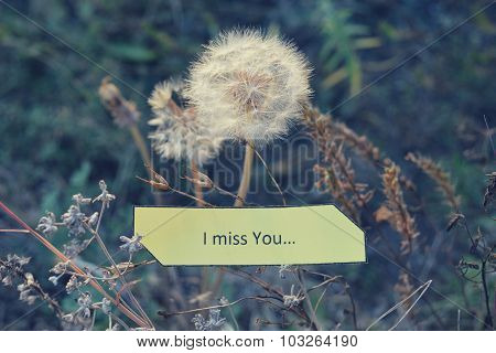 Paper note I Miss You, white dandelions and dry autumn grass in soft colors