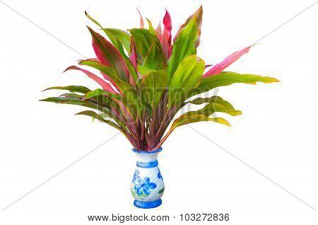 Beautiful Plant In Vase