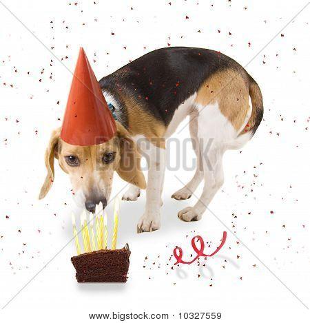 Birthday Beagle