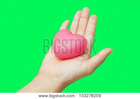 Heart In Hands Isolated On Green Screen Chroma Key Background.