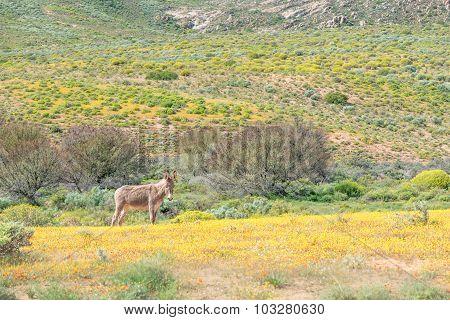 Donkey In A Field Of Wild Flowers