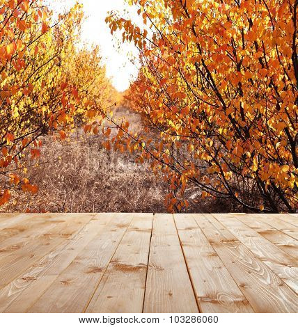 Beautiful autumn forest. Nature background