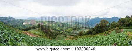 Landscape Planting Season