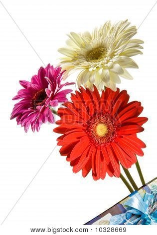 Three bright flowers. Gerber