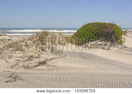 Sand Dunes And Vegetation On A Remote Ocean Coast