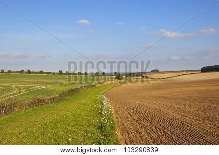 Yorkshire Wolds Agriculture