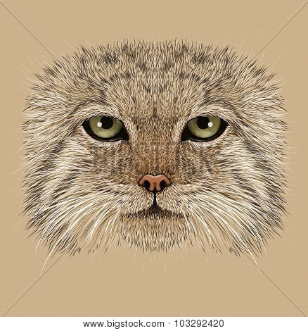 Illustrative Portrait of Pallas' Cat