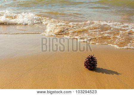pinecone on the shore of sea