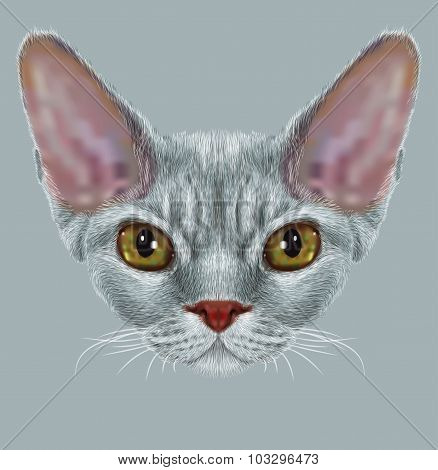 Portrait of Devon Rex Cat