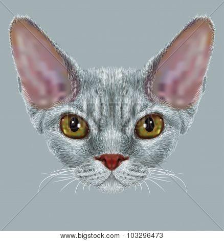Portrait of Devon Rex Cat