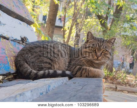 Cat lying on the bench