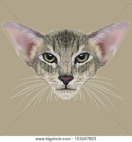 Illustrative Portrait of Oriental Cat