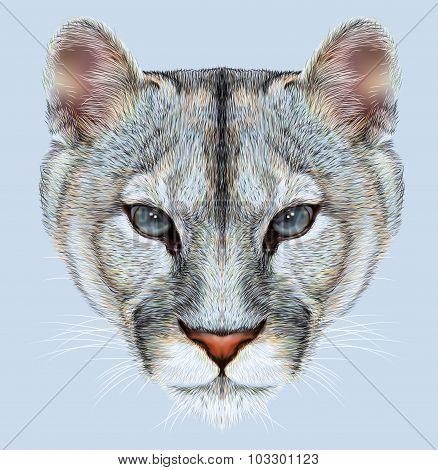 Portrait of Mountain Lion