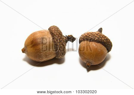 Two Acorns With Hats On Over White