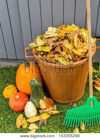 Pile of dead fall leaves dumped into plastic bin, pumpkins and fan rake resting against wooden shed
