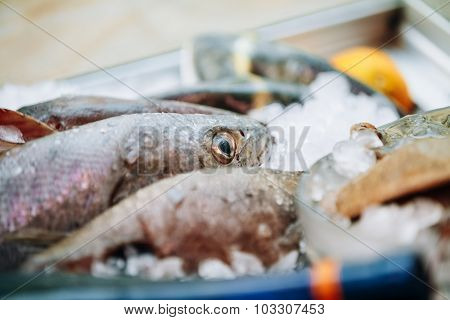 Delicious fish on ice on market store shop. Dorado fish on ice -