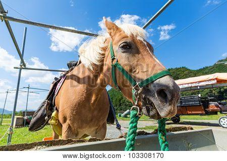 Horse feeding at the trough on the farm
