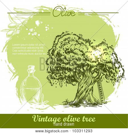 Vintage hand drawn olive tree and olive oil botlle on watercolor background