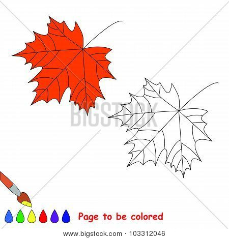 One cartoon maple leaf.