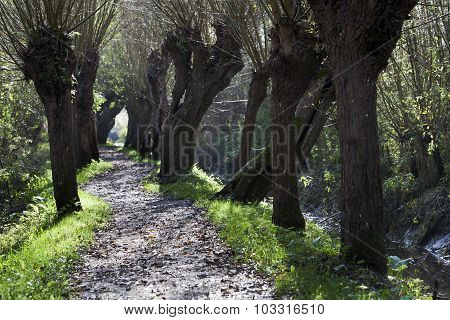 Willows Path