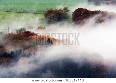 Foggy Woods And Fields