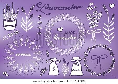 Lavender set. Hand-drawn cartoon lavandula collection - flowers, calligraphy, floral elements. Doodl