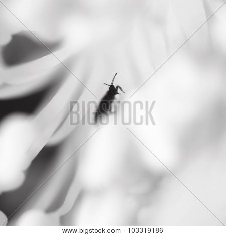 Abstract blurred image of the beetle inside flower