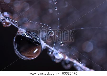 Droplet in blue on spider web close up