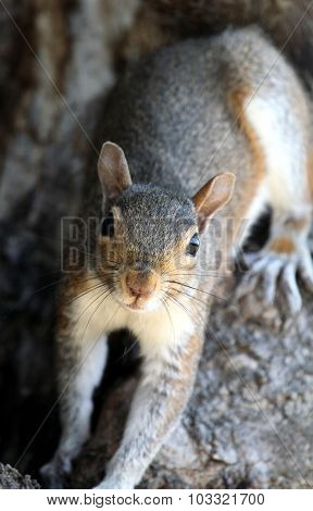 Squirrel Portrait