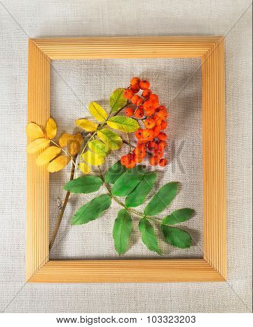 Rowan Branch On The Canvas In Wooden Frame