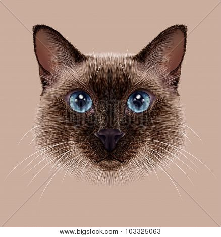 Illustrative Portrait of a Thai Cat
