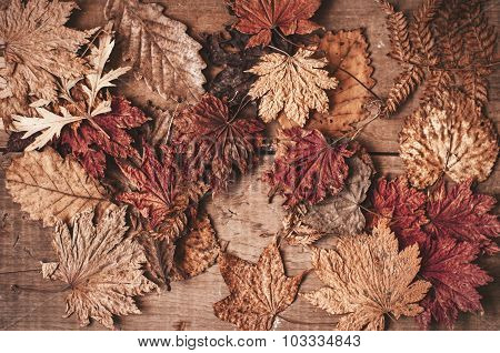 Autumnal Dry Maple And Oak Leaves