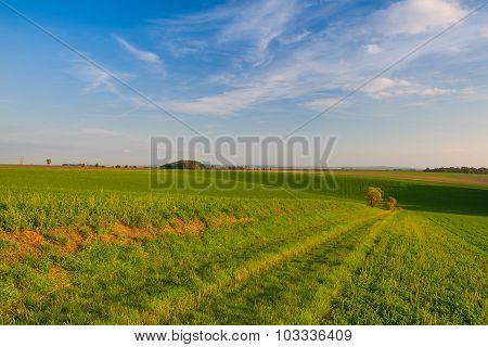 Path Between Green Fields