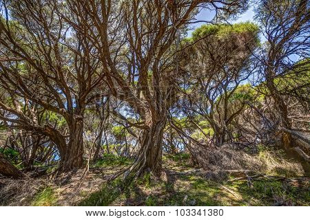coastline forest