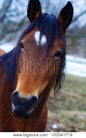 Brown Horse in winter land on straw