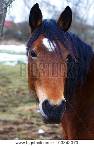 Head Brown Horse and  land in background