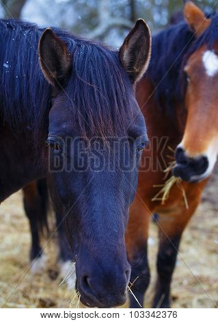 black and Brown Horse in land