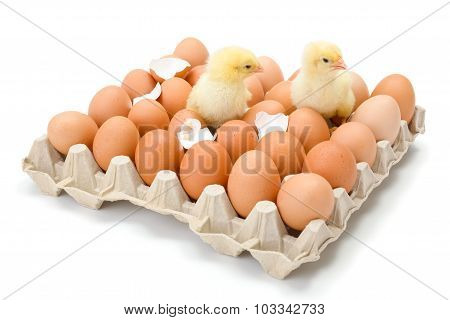 Pair Of Little Newborn Yellow Chickens In Egg Tray