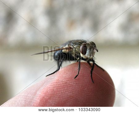 Fly On My Finger