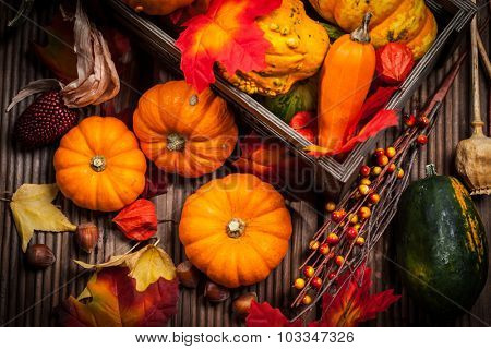 Autumn still life with pumpkins for Thanksgiving and Halloween