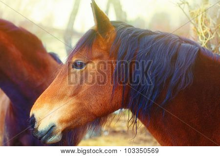 Brown Horse in sun land