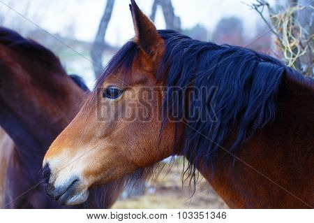 Two Brown Horses in winter land