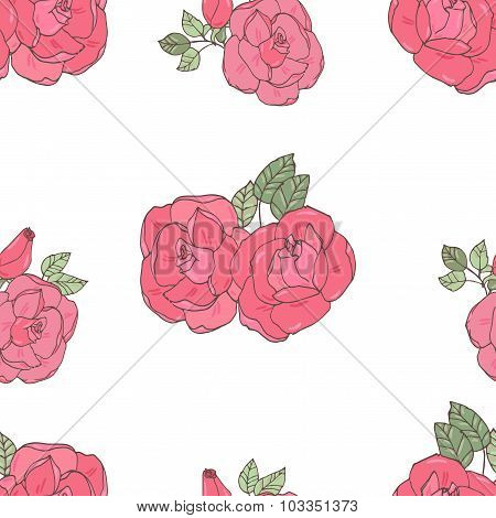 Pink rose on the white background.